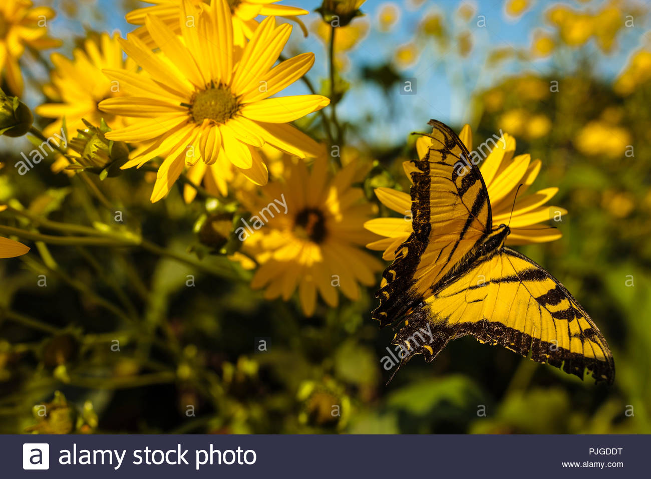 Butterfly Landing On Plant Stock Photos & Butterfly Landing On Plant ...