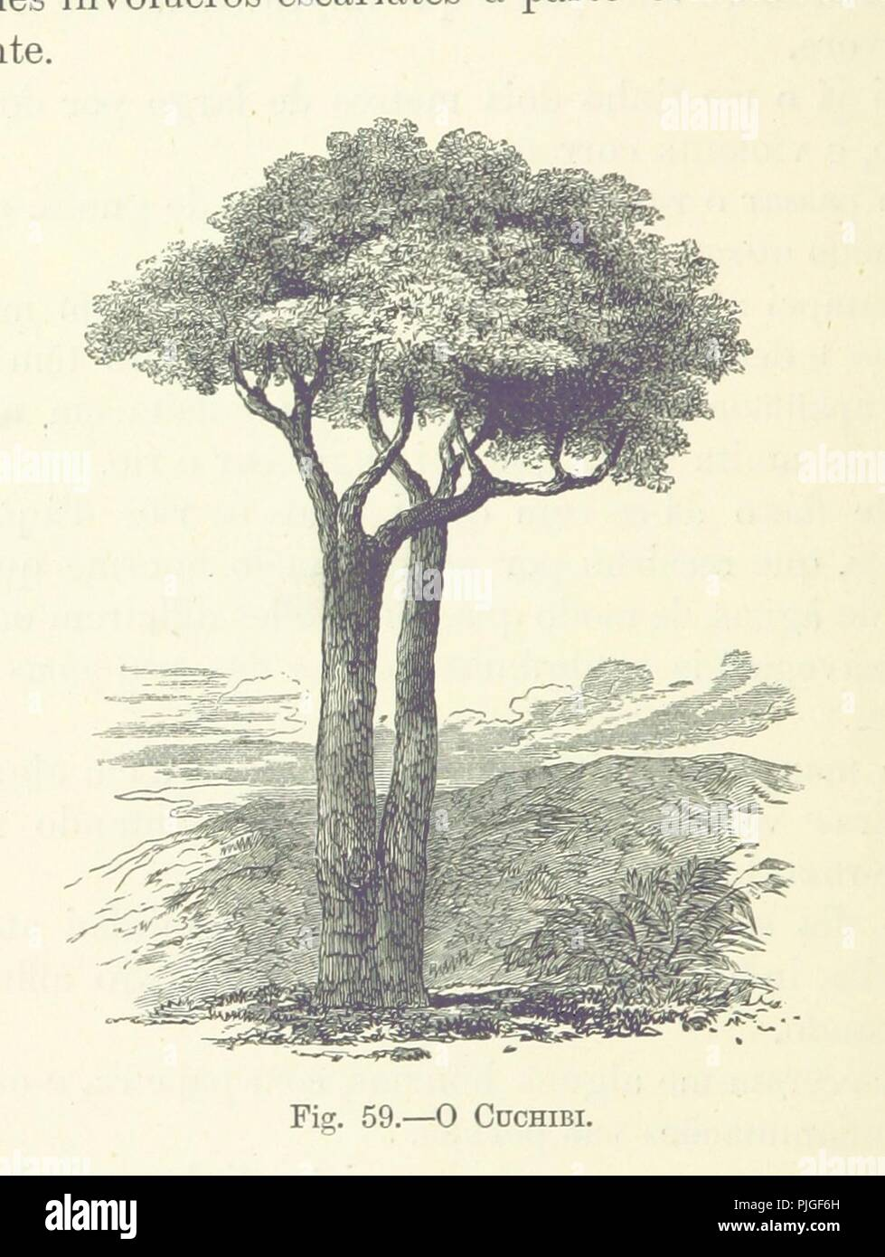 Image  from page 302 of 'Como eu atravessei Àfrica do Atlantico ao Mar Indico, viagem de. - Stock Image