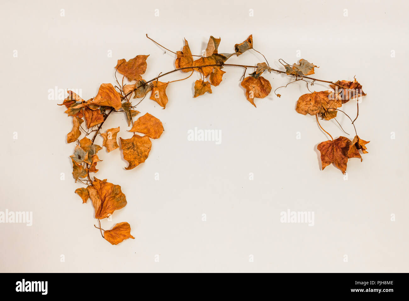 Leafy frame with white copy space. - Stock Image