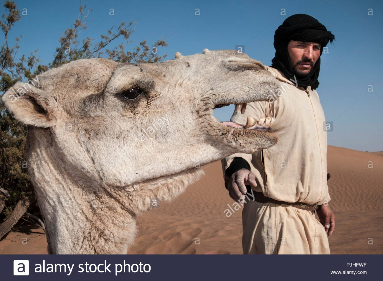 Morocco, Western Sahara, camel driver with his camel in the Saharian desert - Stock Image