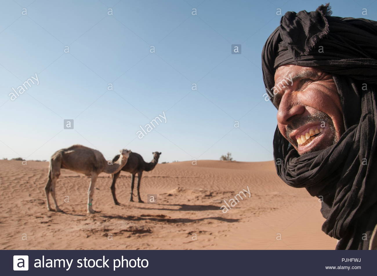 Morocco, Western sahara, camel driver and his two camels - Stock Image