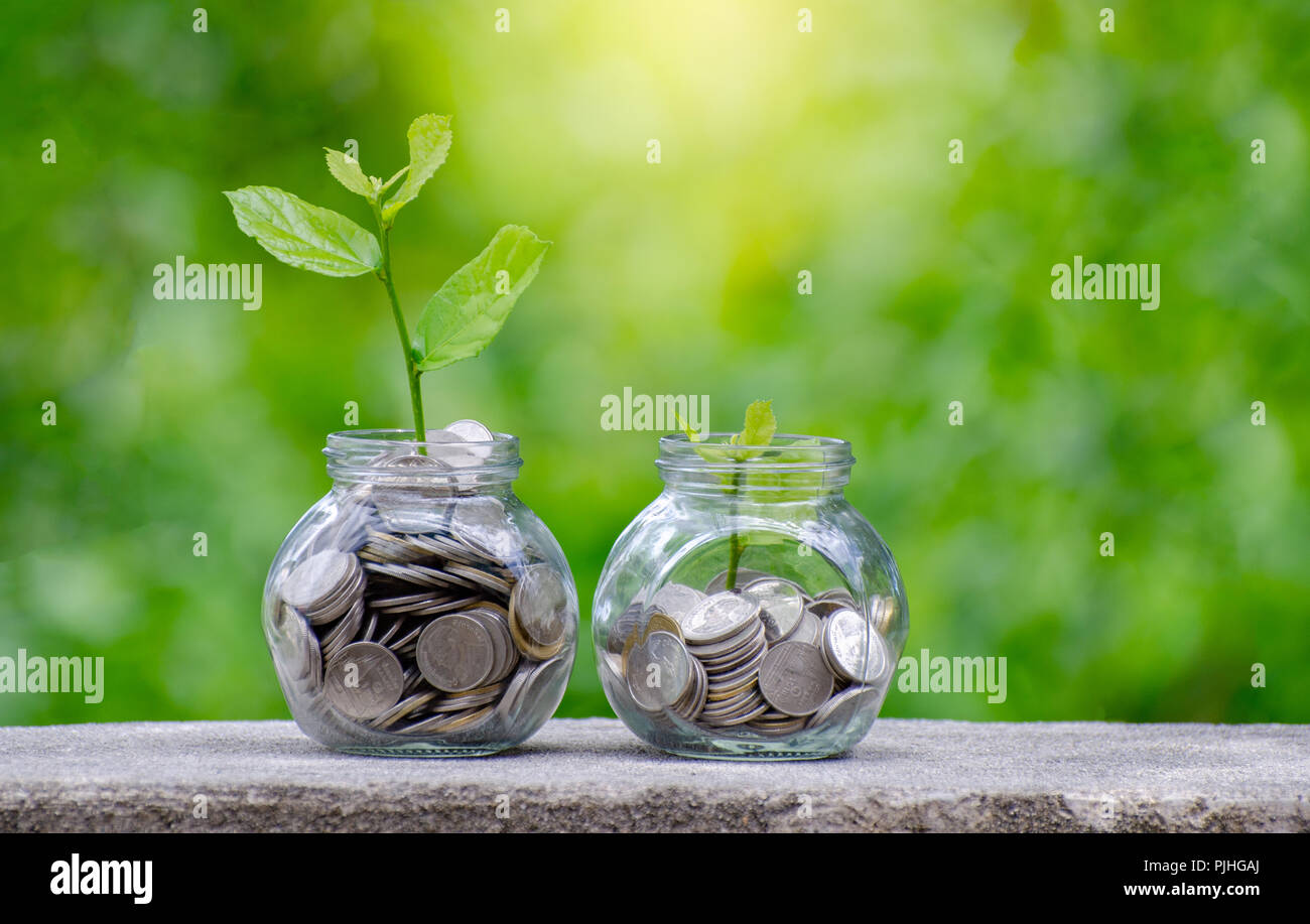 Coin tree Glass Jar Plant growing from coins outside the glass jar on blurred green natural background money saving and investment financial concept Stock Photo