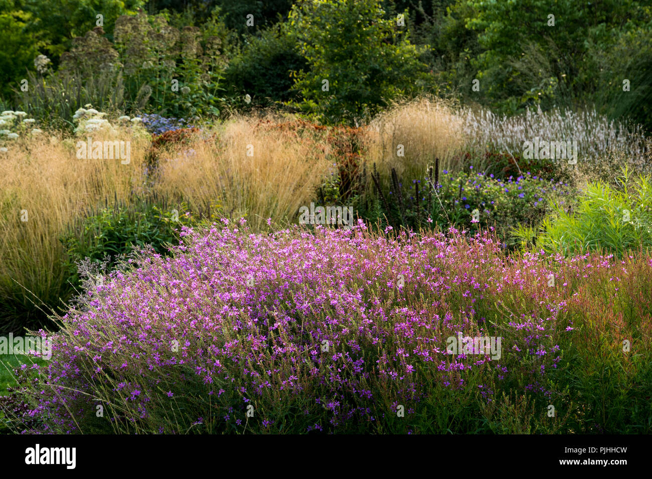 Perennials And Ornamental Grasses In A Large Garden Stock Photo