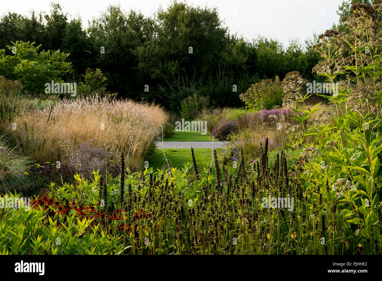 Herbaceous borders with ornamental grasses and perennials - Stock Image