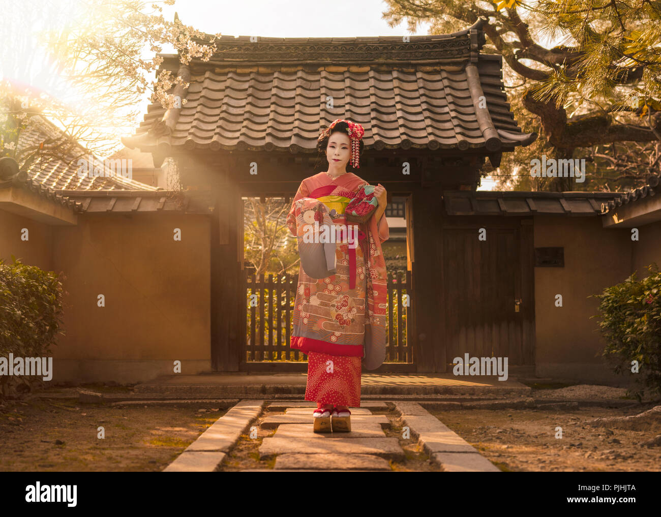 Maiko in a kimono posing on a stone path in front of the gate of a traditional Japanese house surrounded by cherry blossoms and pine trees in the rays Stock Photo