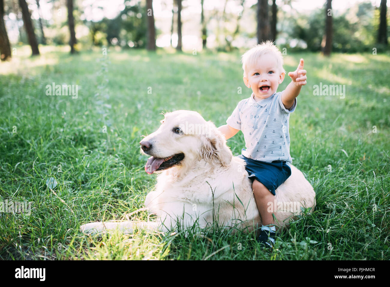 Little child playing with Labrador retriever dog together in wood - Stock Image
