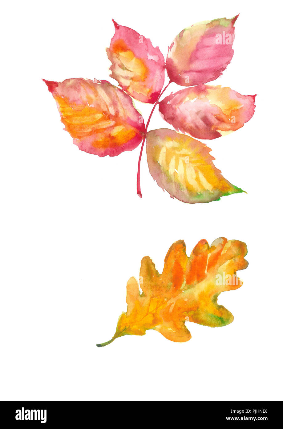 Delicate autumn leaf of Raspberry. Oak Leaf. Watercolor natural background. - Stock Image
