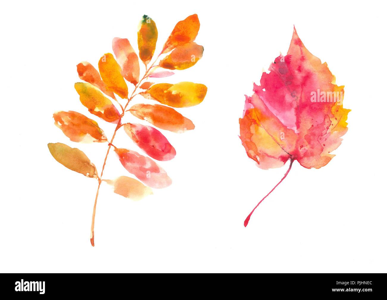 Populus tremula autumn leaf. Caragana arborescence leaf. Autumn. Watercolor background. - Stock Image