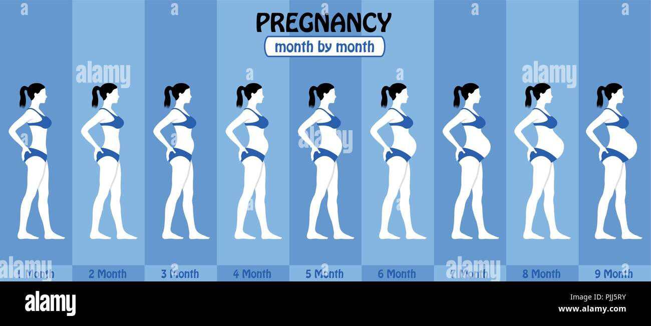 Month by month pregnancy stages of pregnant woman with bikini. All the objects and body stages are in different layers and the text types do not need  - Stock Vector