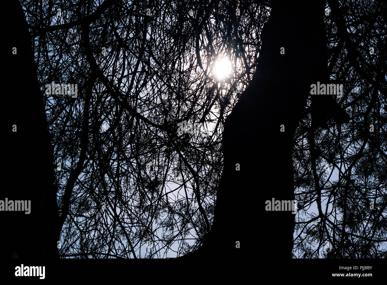 Sun filtering through trees creating a silhouette Stock Photo