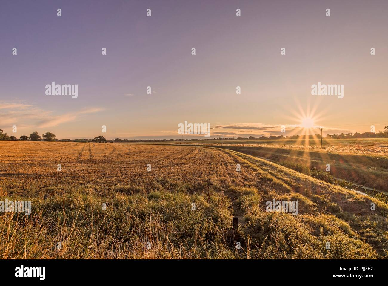 The dawn light falls on a field that has recently been harvested.  The stubble has a golden glow and there are furrows running through it. A small str - Stock Image