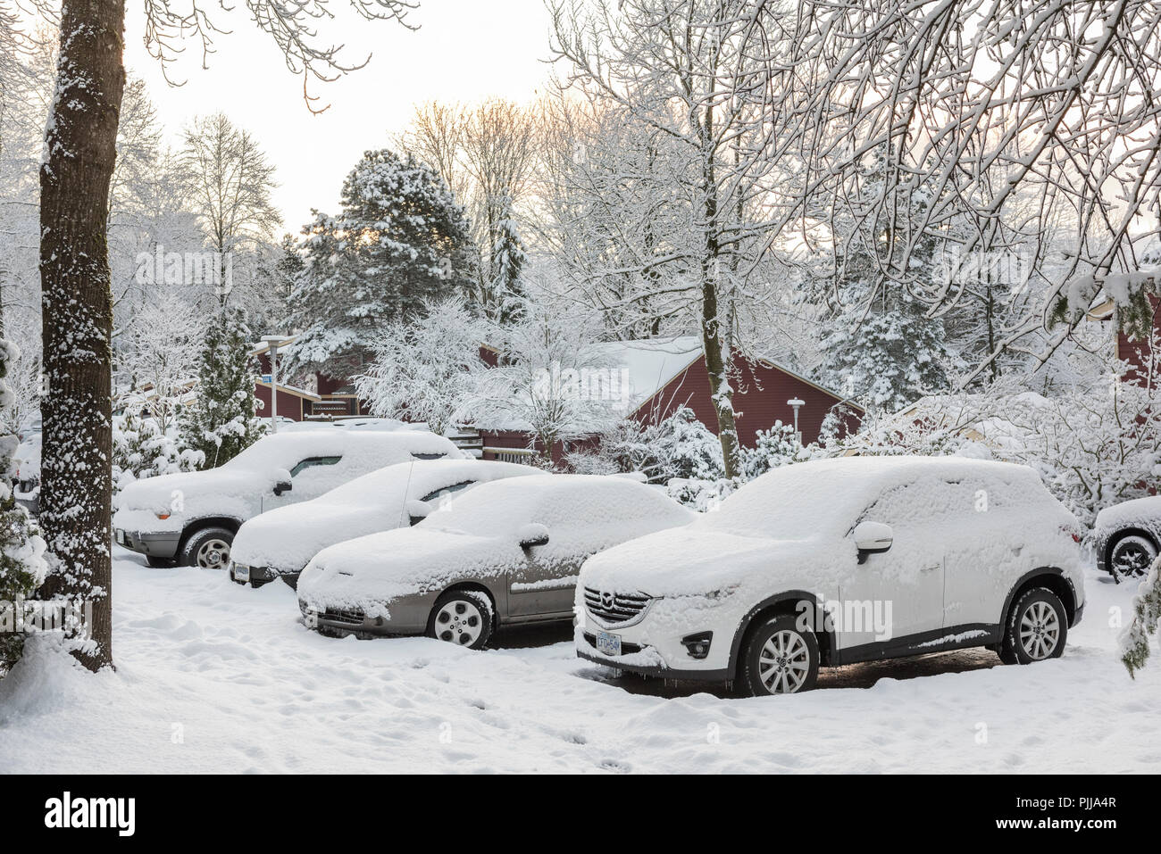 Parked automobiles covered in snow. - Stock Image