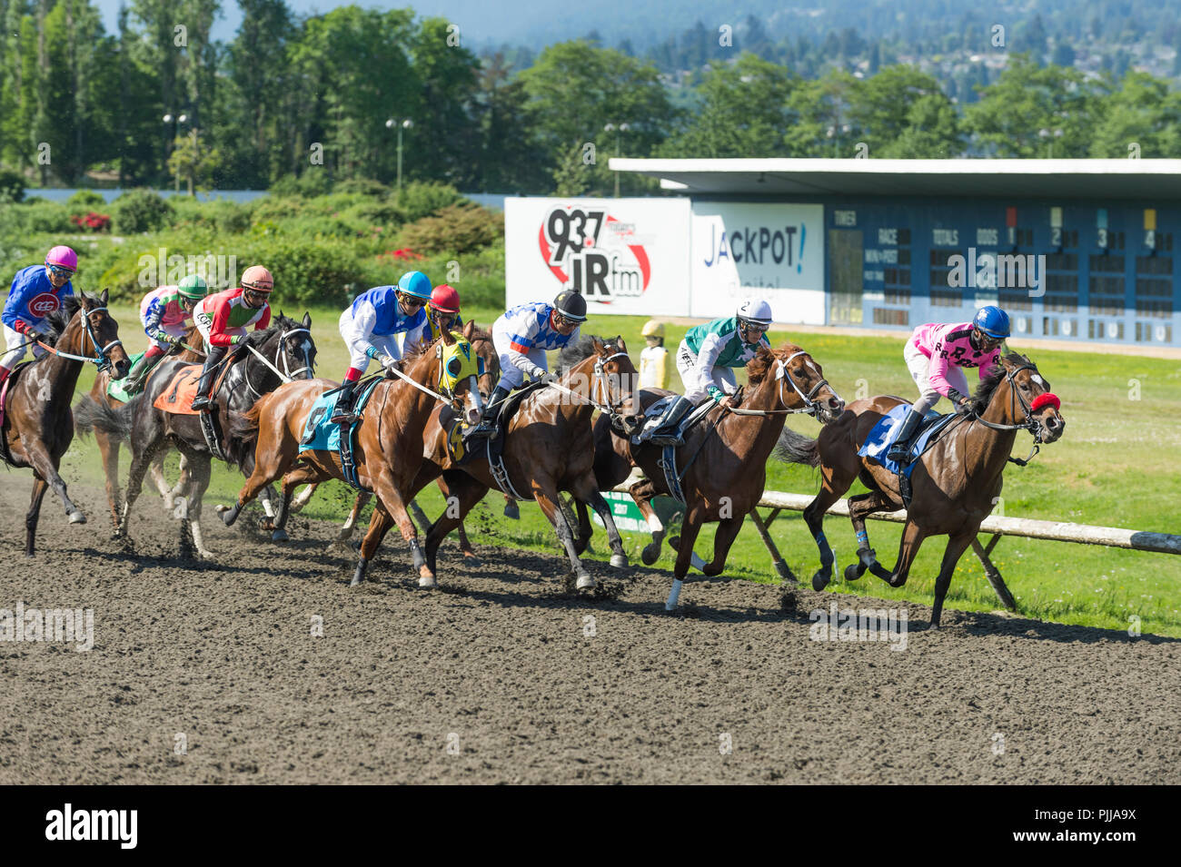 Jockeys and Horses racing at Hastings Park Racetrack, Vancouver - Stock Image