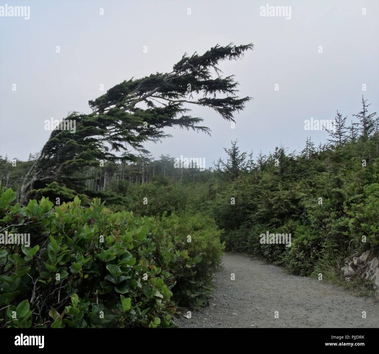 Taken to capture the wild and windy conditions of the far west reaches of British Columbia's Ucluelet, on the Pacific Ocean side of Vancouver Island. - Stock Image