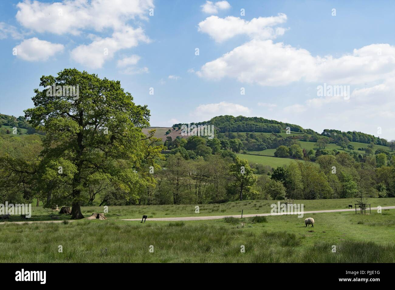 Taken to capture the pastoral perfection and lush spring time greenery within Hathersage meadowland, in the Peak District, Derbyshire. - Stock Image