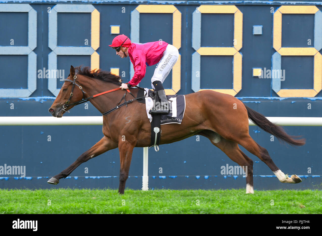 Sydney, Australia. 08 Sep 2018. Jockey Sam Weatherley rides Mandylion to victory in race 1, the Canadian Club Handicap, during Run To The Rose Day at the Rosehill Gardens Racecourse, Sydney, Australia. Credit: Rafal Kontrym/Alamy Live News. - Stock Image