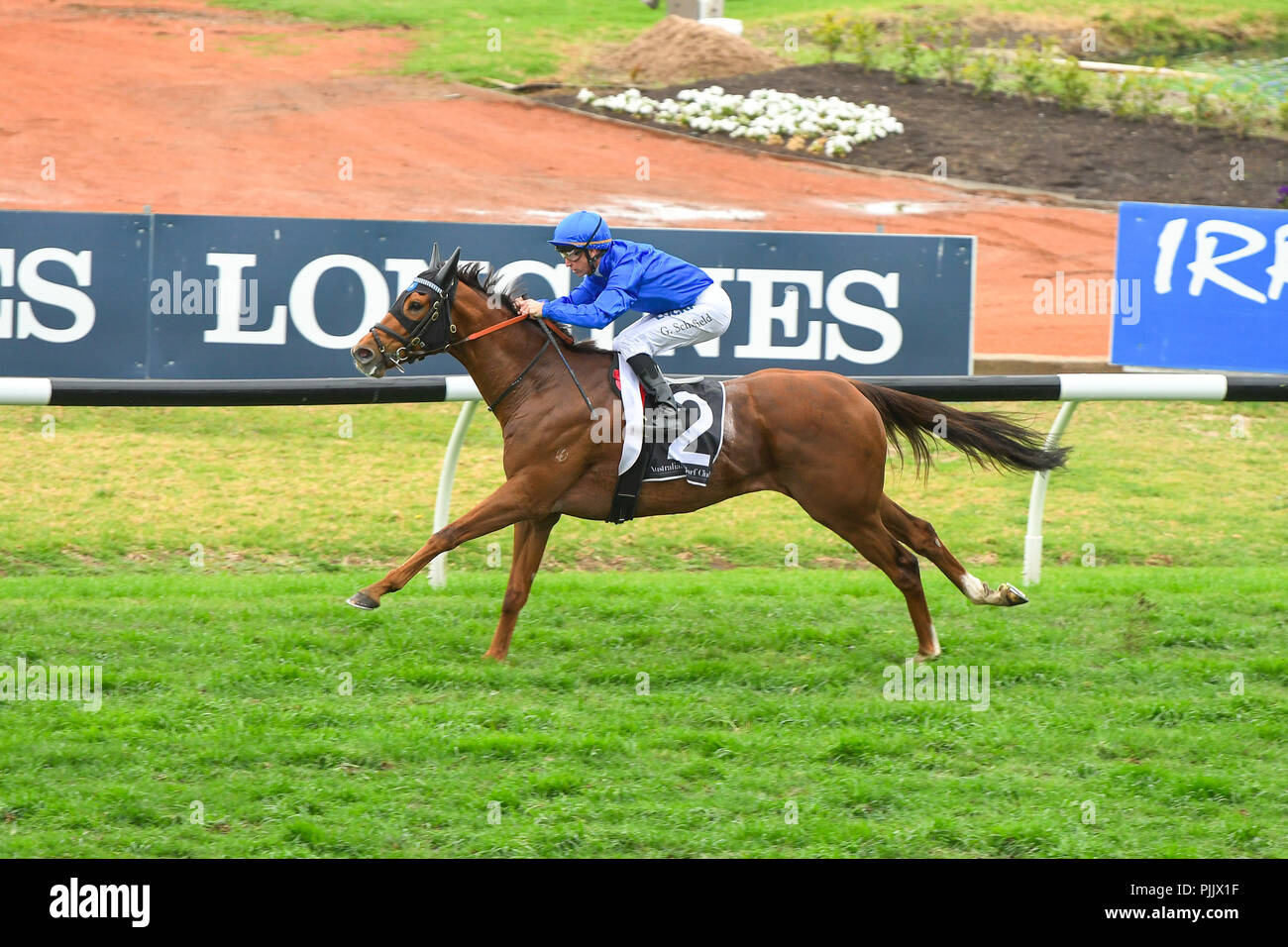 Sydney, Australia. 08 Sep 2018. Jockey Glyn Schofield rides Home Of The Brave to victory in race 5, the Theo Marks Stakes, during Run To The Rose Race Day at the Rosehill Gardens Racecourse, Sydney, Australia. Credit: Rafal Kontrym/Alamy Live News. - Stock Image