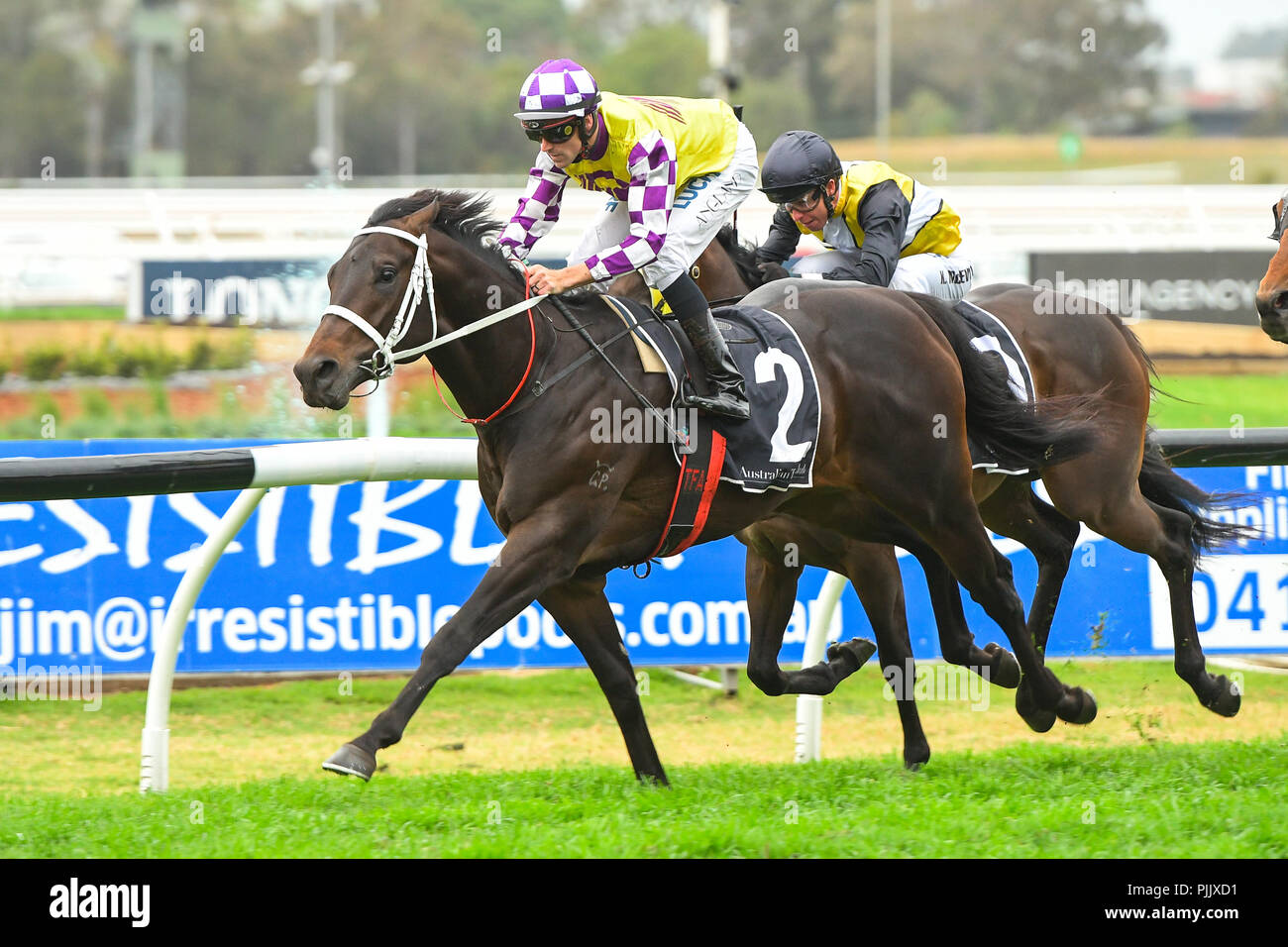 Sydney, Australia. 08 Sep 2018. Jockey Tye Angland rides Lean Mean Machine to victory in race 6, the The Run To The Rose, during Run To The Rose Race Day at the Rosehill Gardens Racecourse, Sydney, Australia. Credit: Rafal Kontrym/Alamy Live News. - Stock Image