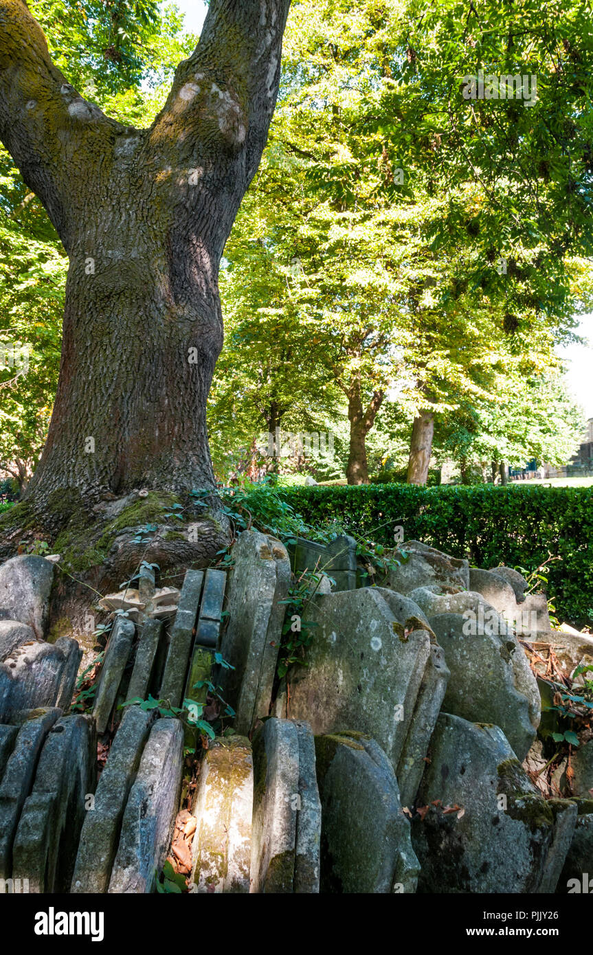 The Hardy Tree in Old St Pancras Burial Ground. Gravestones moved by Thomas Hardy when a surveyor in nineteenth century. - Stock Image