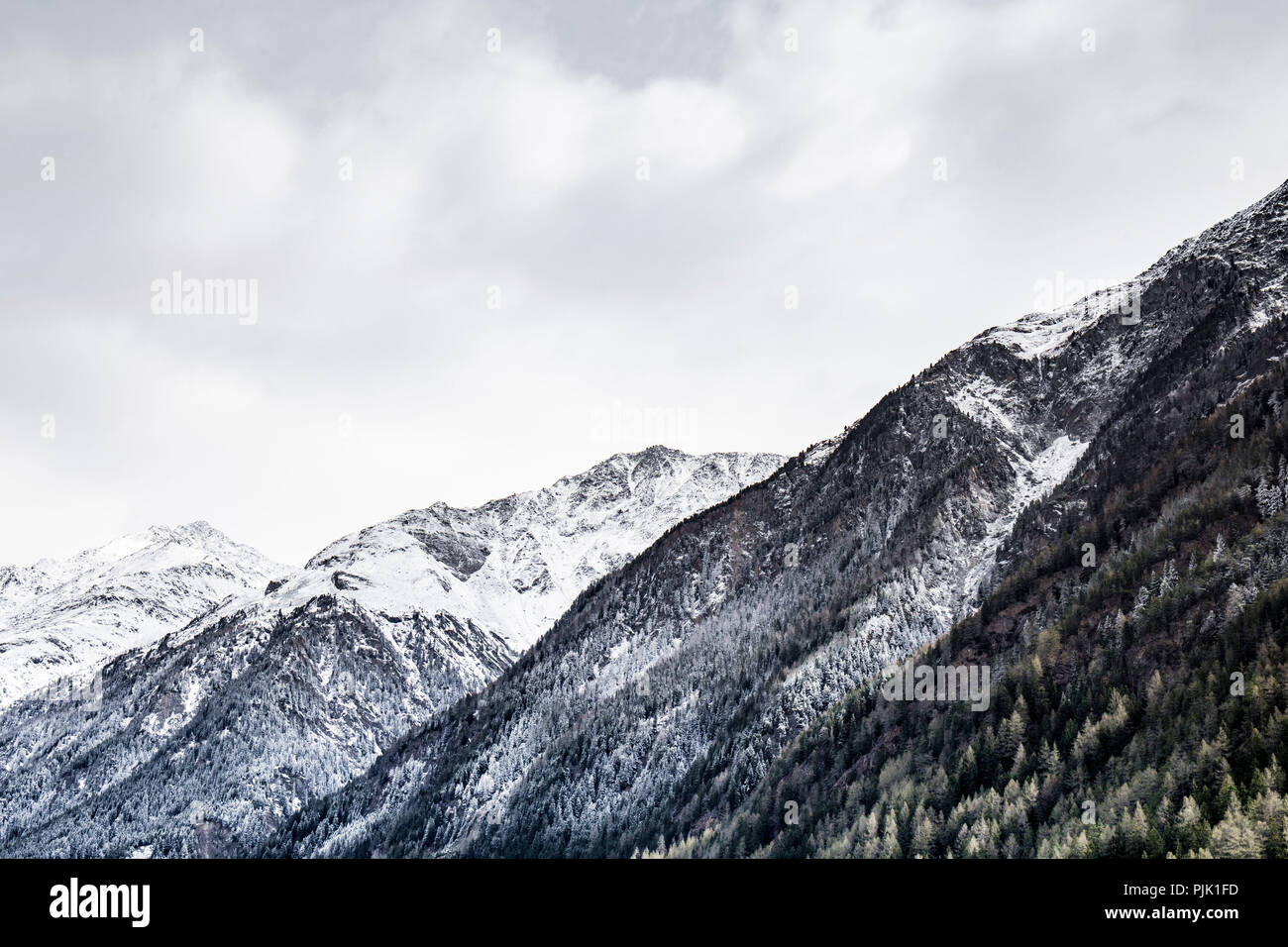 A snow covered slope with conifers in Tyrol - Stock Image