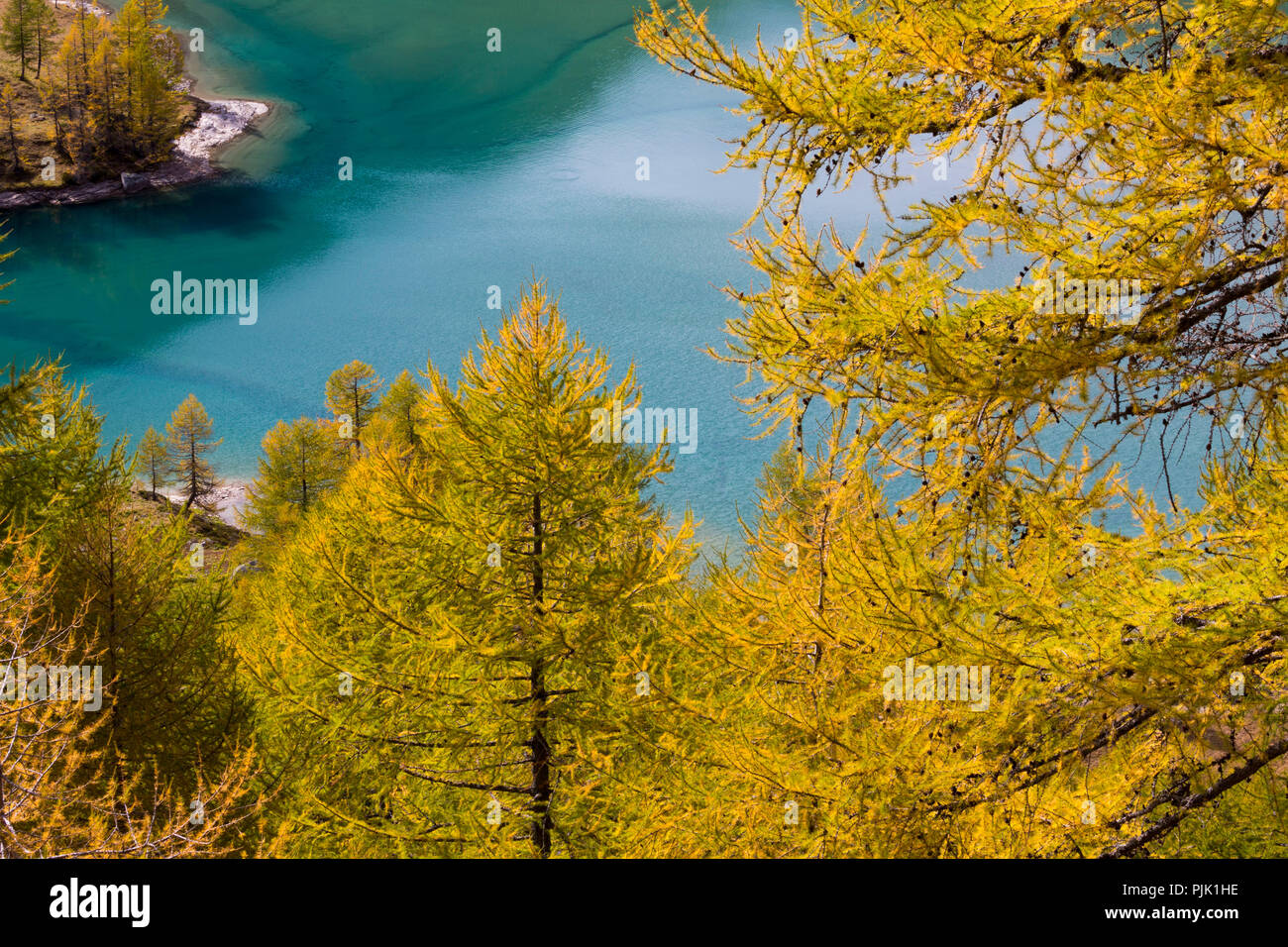 Autumn on the Alp Grüm near Poschiavo, canton of Grisons, Switzerland - Stock Image