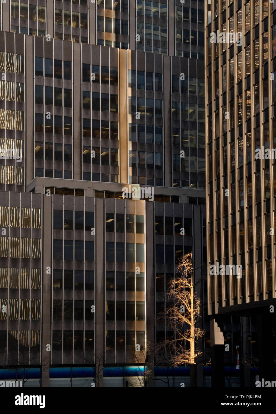 Skyscrapers and a lone leafless tree in downtown Manhattan, New York City, USA - Stock Image