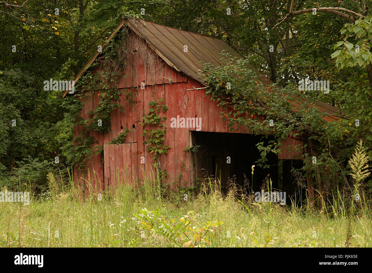 Abandoned shed in rural Virginia - Stock Image