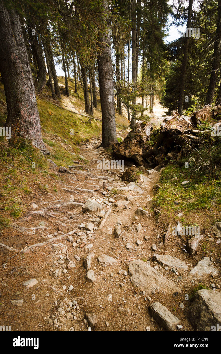 Forest trail, Obermillstatt, Lake Millstatt, Carinthia, Austria - Stock Image