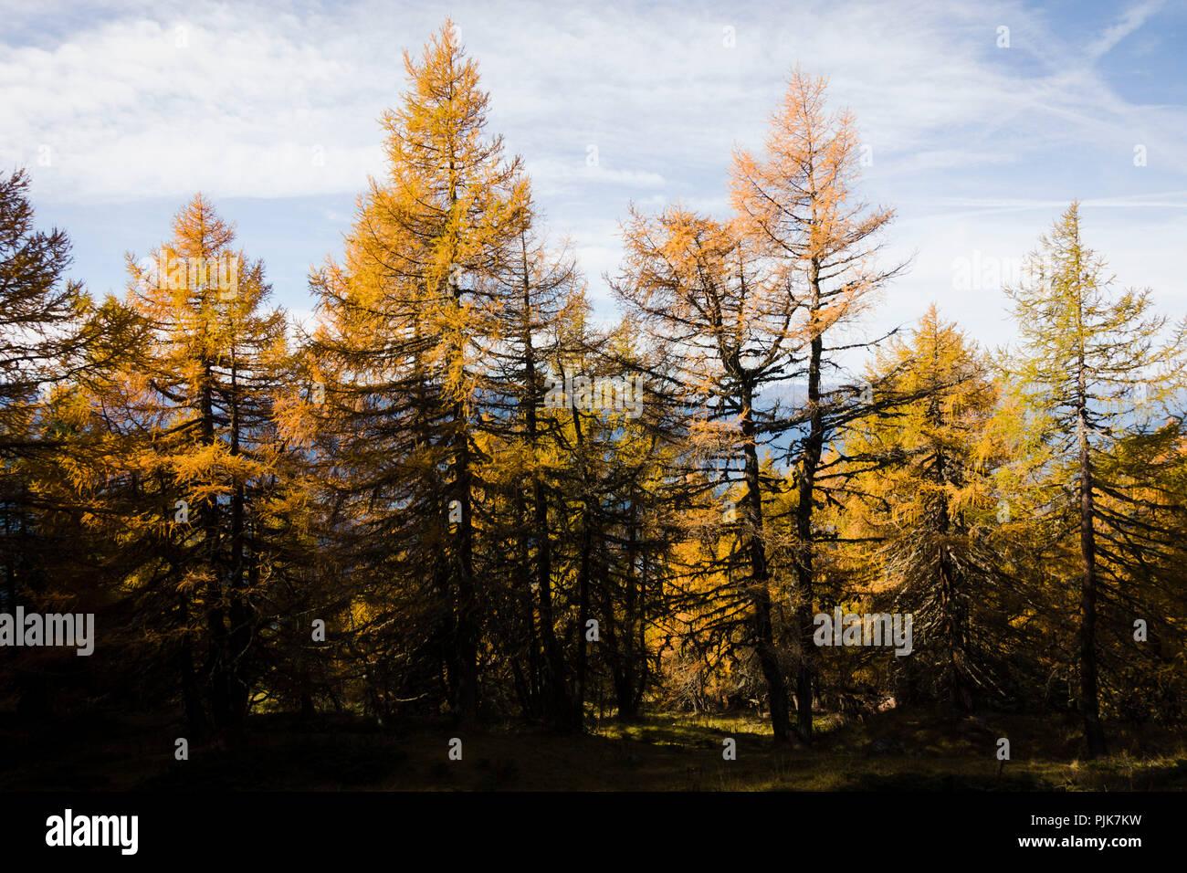 Autumn forest, Obermillstatt, Lake Millstatt, Carinthia, Austria - Stock Image