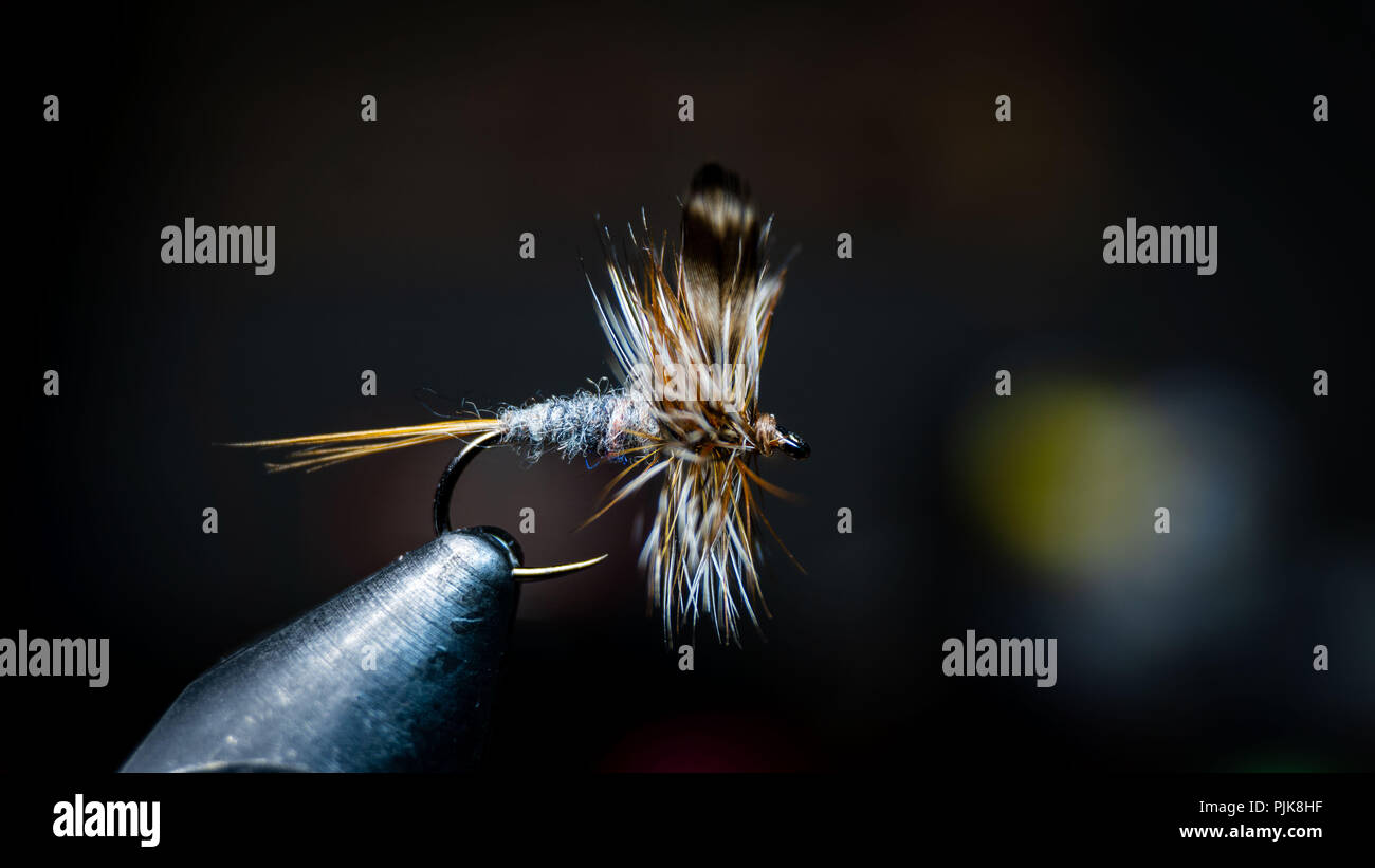Fly tying a traditional trout fly, the Adams dry fly.  The most popular of the catskill style flies - Stock Image