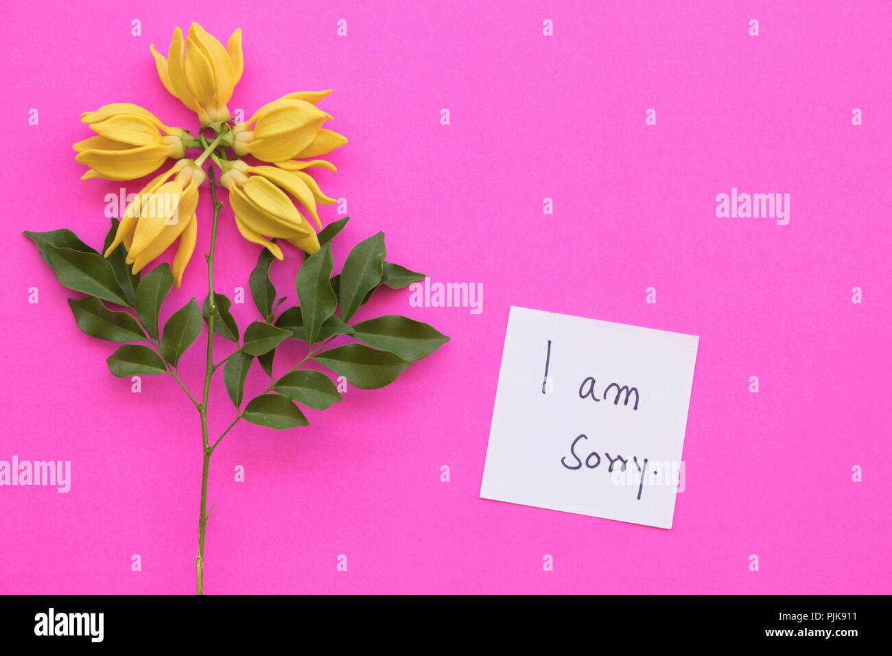 I am sorry message card handwriting with ylang ylang yellow flower i am sorry message card handwriting with ylang ylang yellow flower arrangement on background pink mightylinksfo
