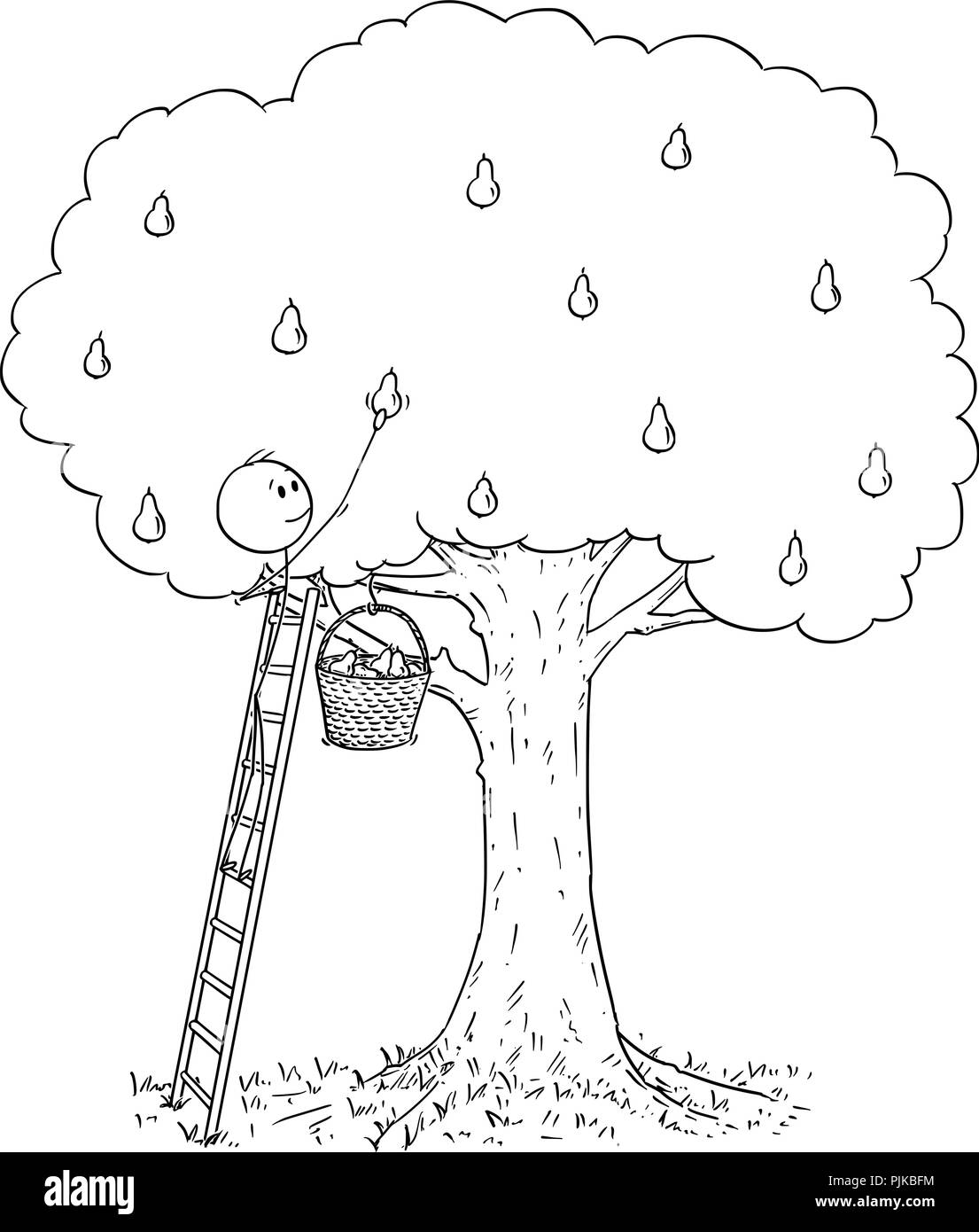 Cartoon of Man on Ladder Picking Fruit From Pear Tree - Stock Vector
