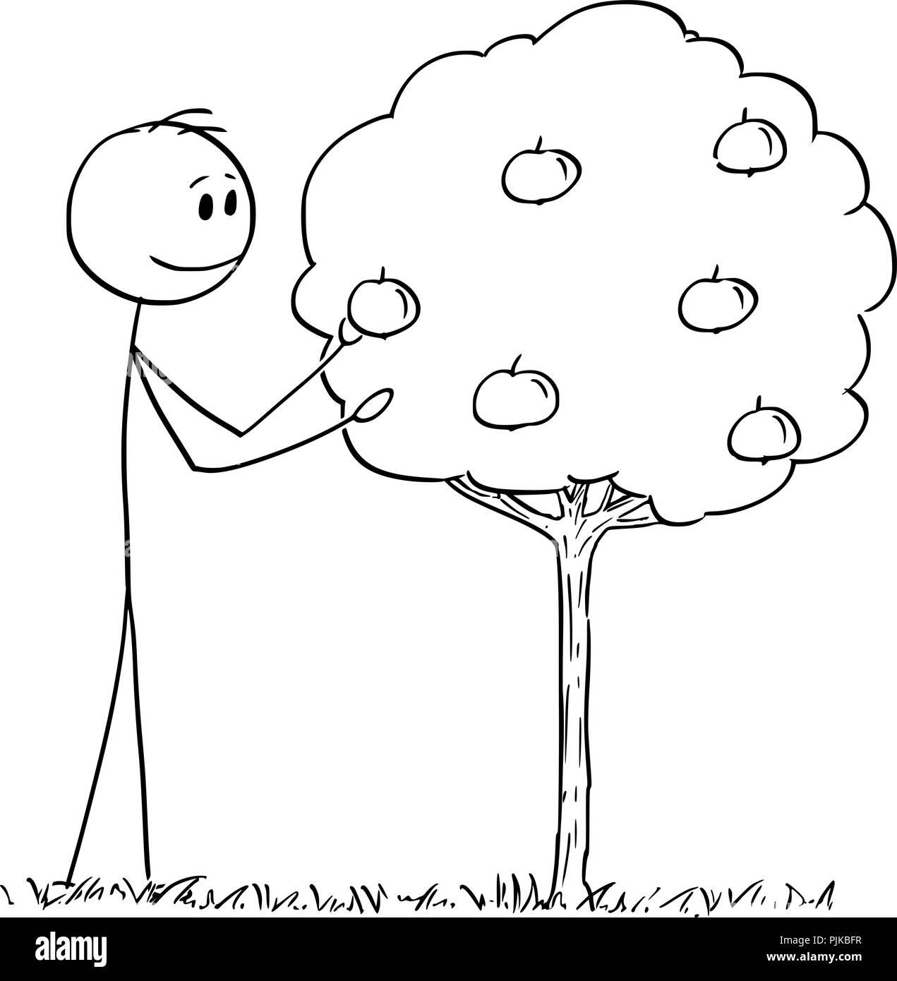 Cartoon of Man Picking Fruit From Small Apple Tree - Stock Vector