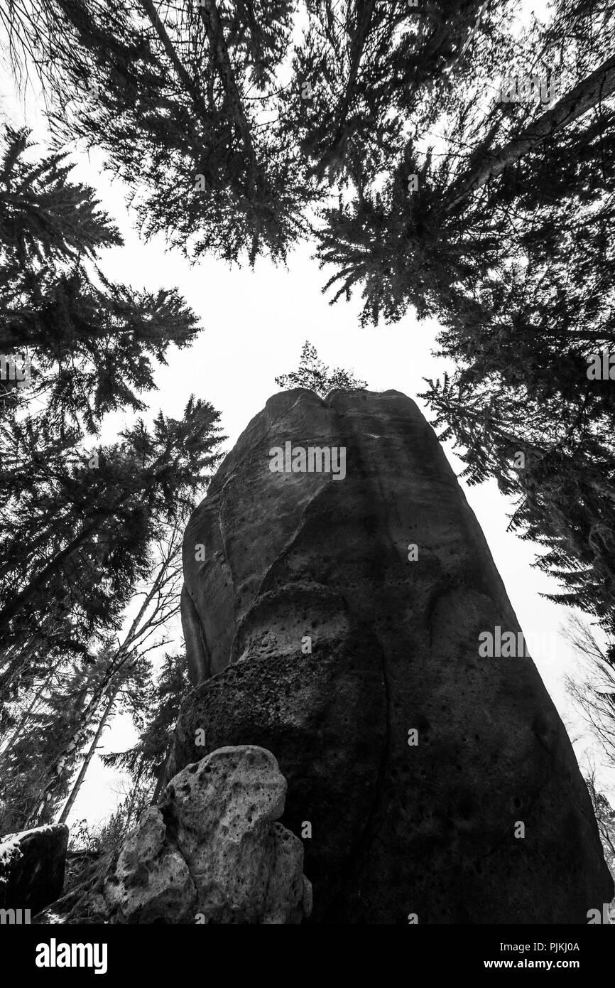 Germany, Saxony, Upper Lusatia, Zittau Mountains, sandstone cliffs, trees, from below - Stock Image