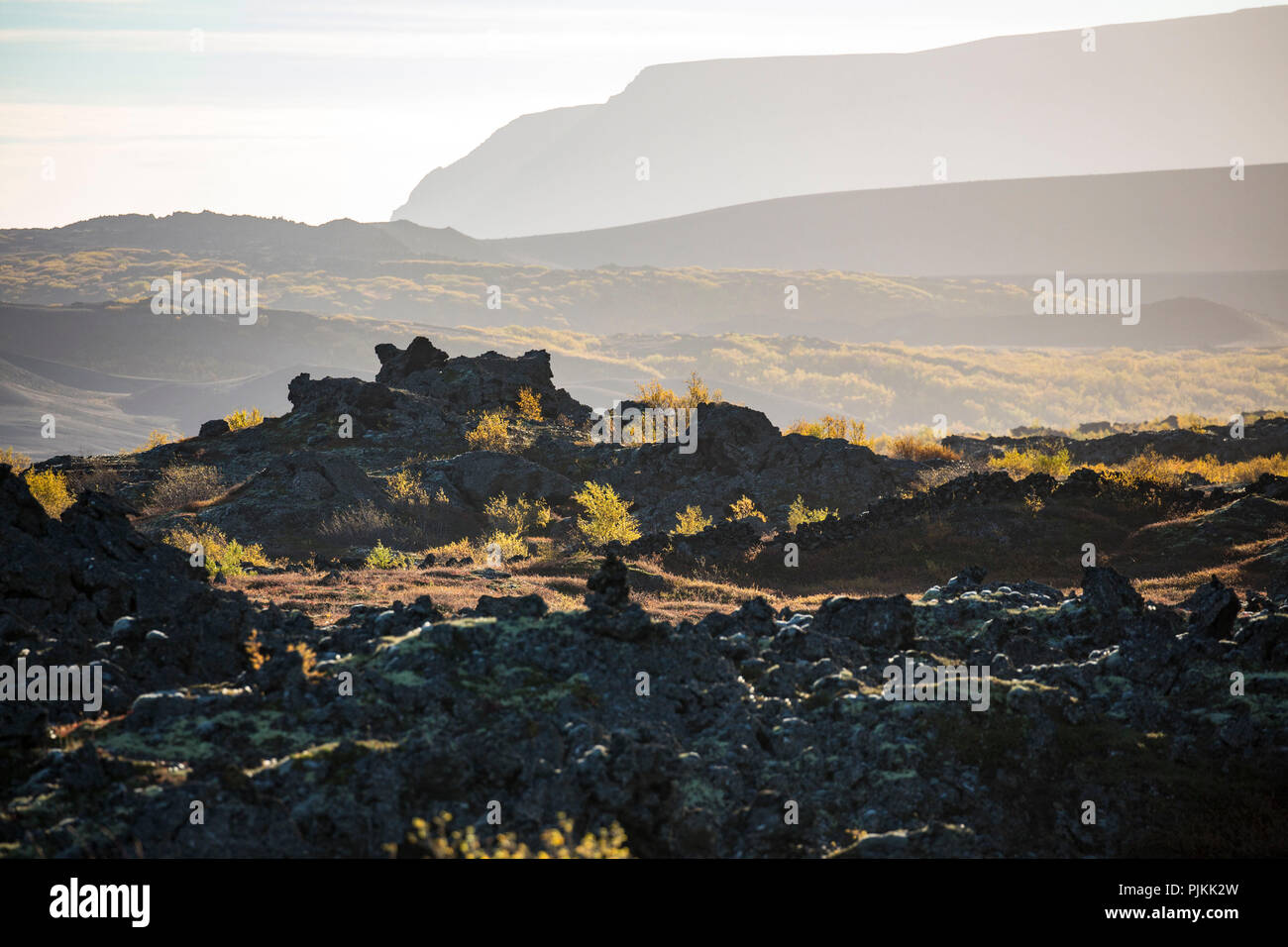 Iceland, Myvatn, Dimmuborgir lava field, pseudo crater, autumn leaves, backlight, evening light - Stock Image