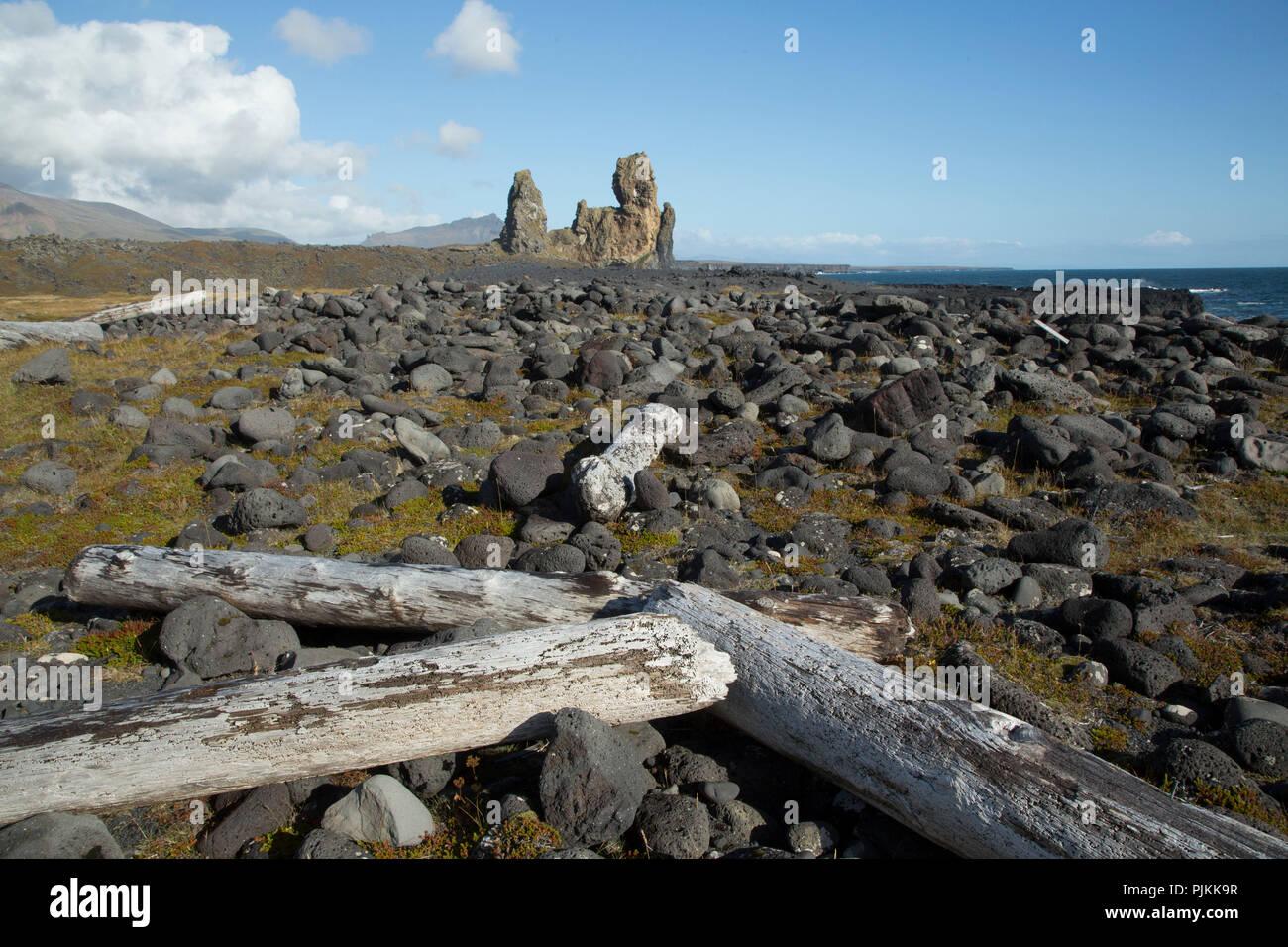 Iceland, Snaefellsnes, Cliffs of Londrangar, driftwood on the lava beach, volcano vent, blue sky - Stock Image