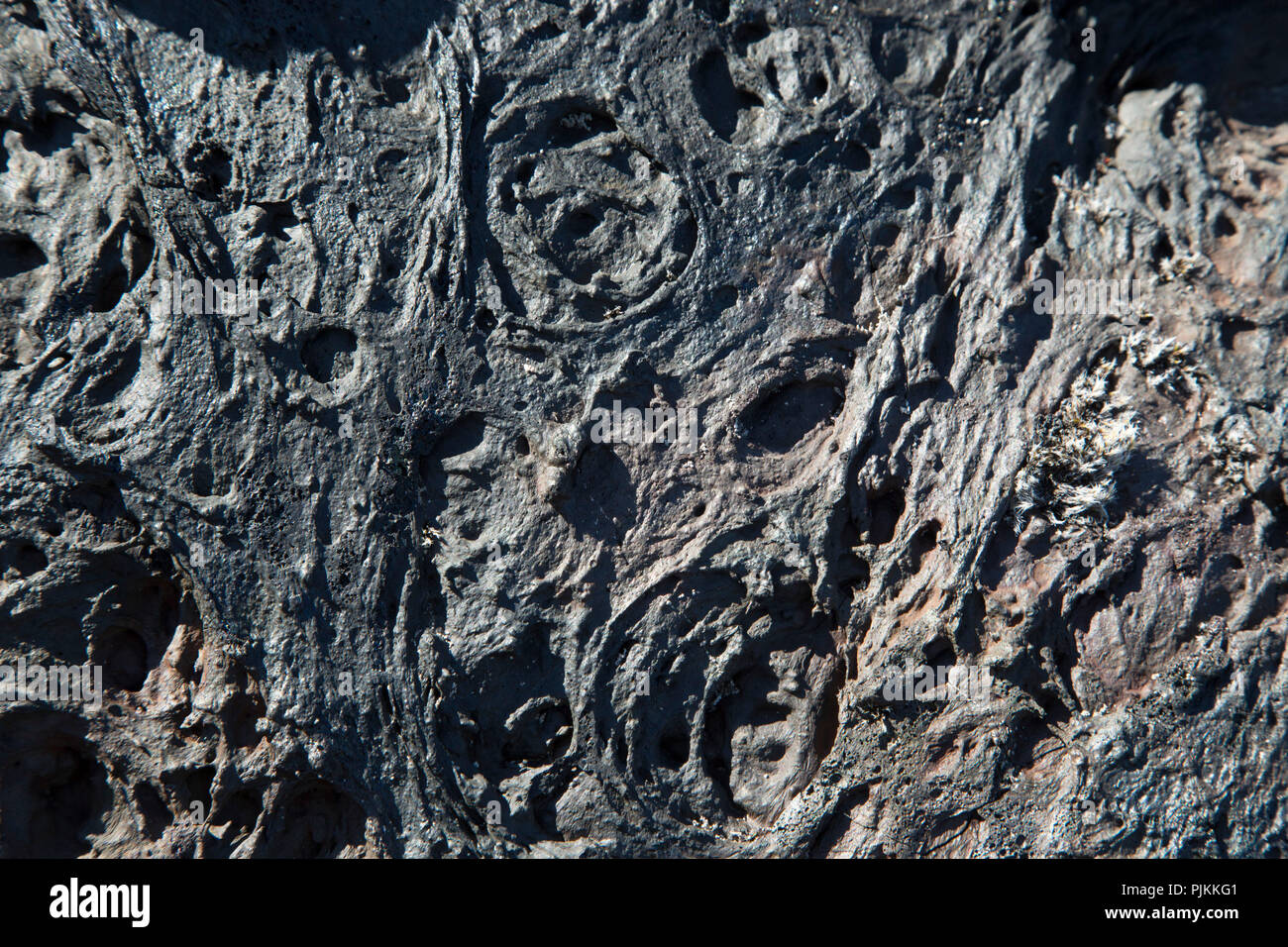 Iceland, cooled lava, detail, black and shiny - Stock Image