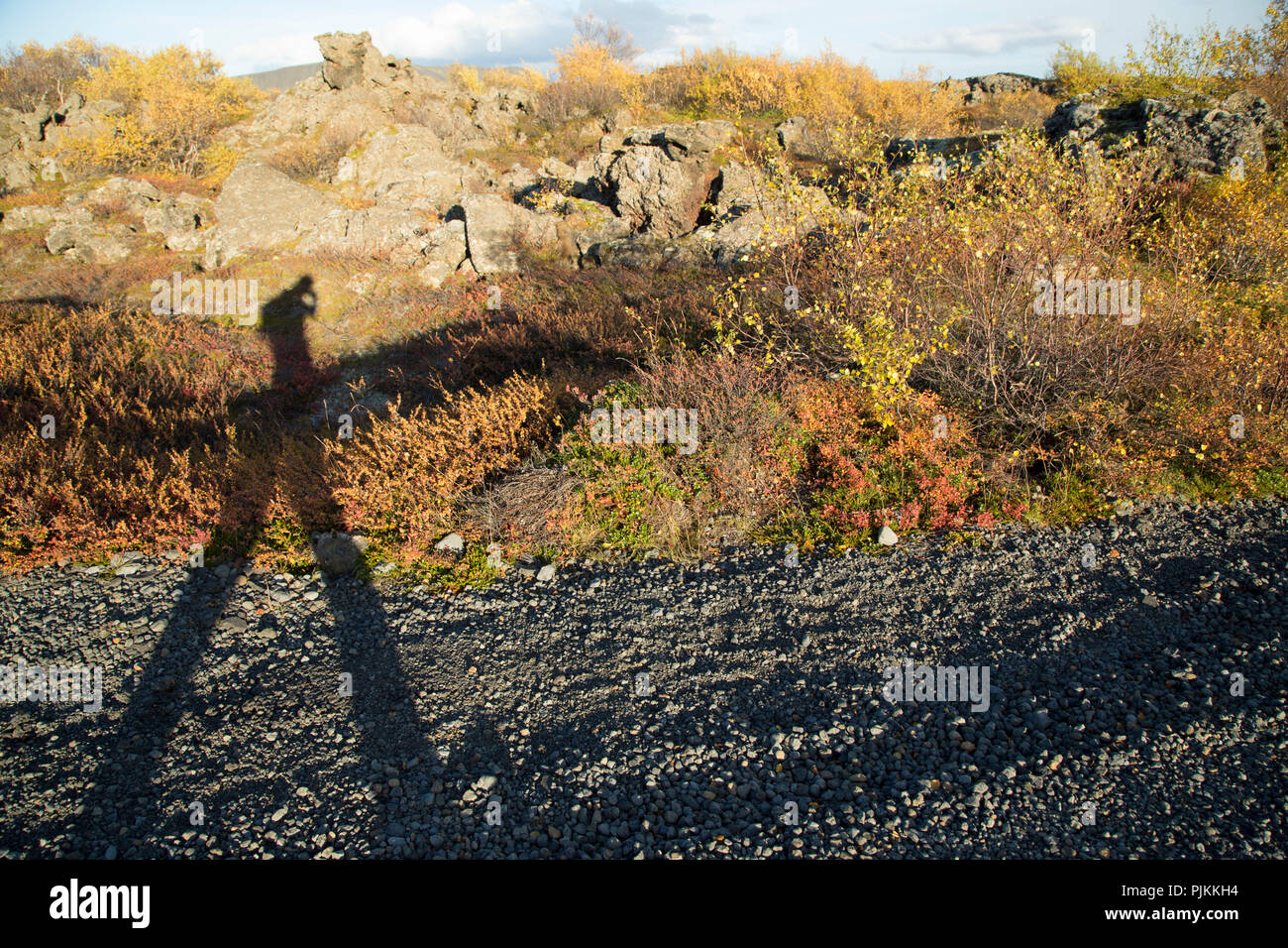 Iceland, Myvatn, human shadow on the roadside, lava field Dimmuborgir, autumnal foliage, dwarf birches, - Stock Image