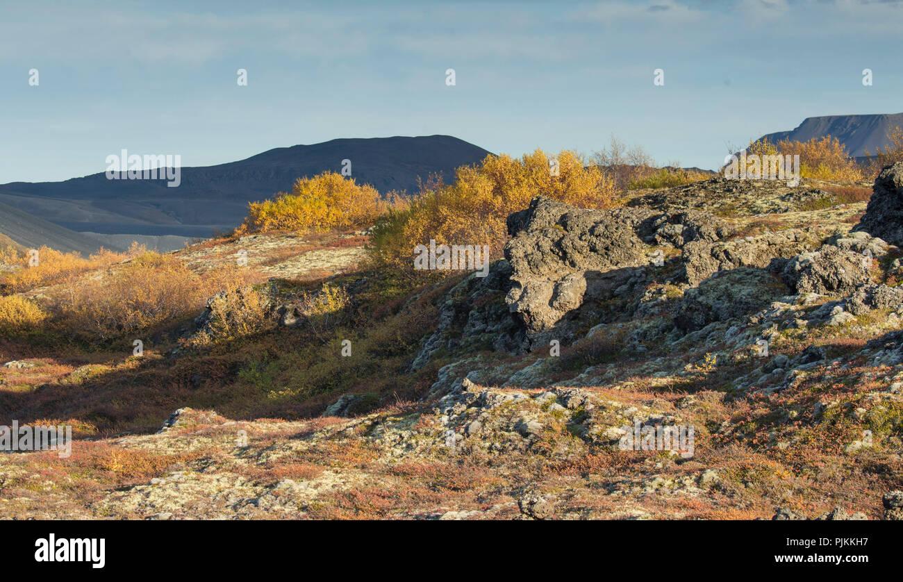 Iceland, Myvatn, Dimmuborgir lava field, autumnal foliage, dwarf birches, shadow on mountain in background, evening light - Stock Image