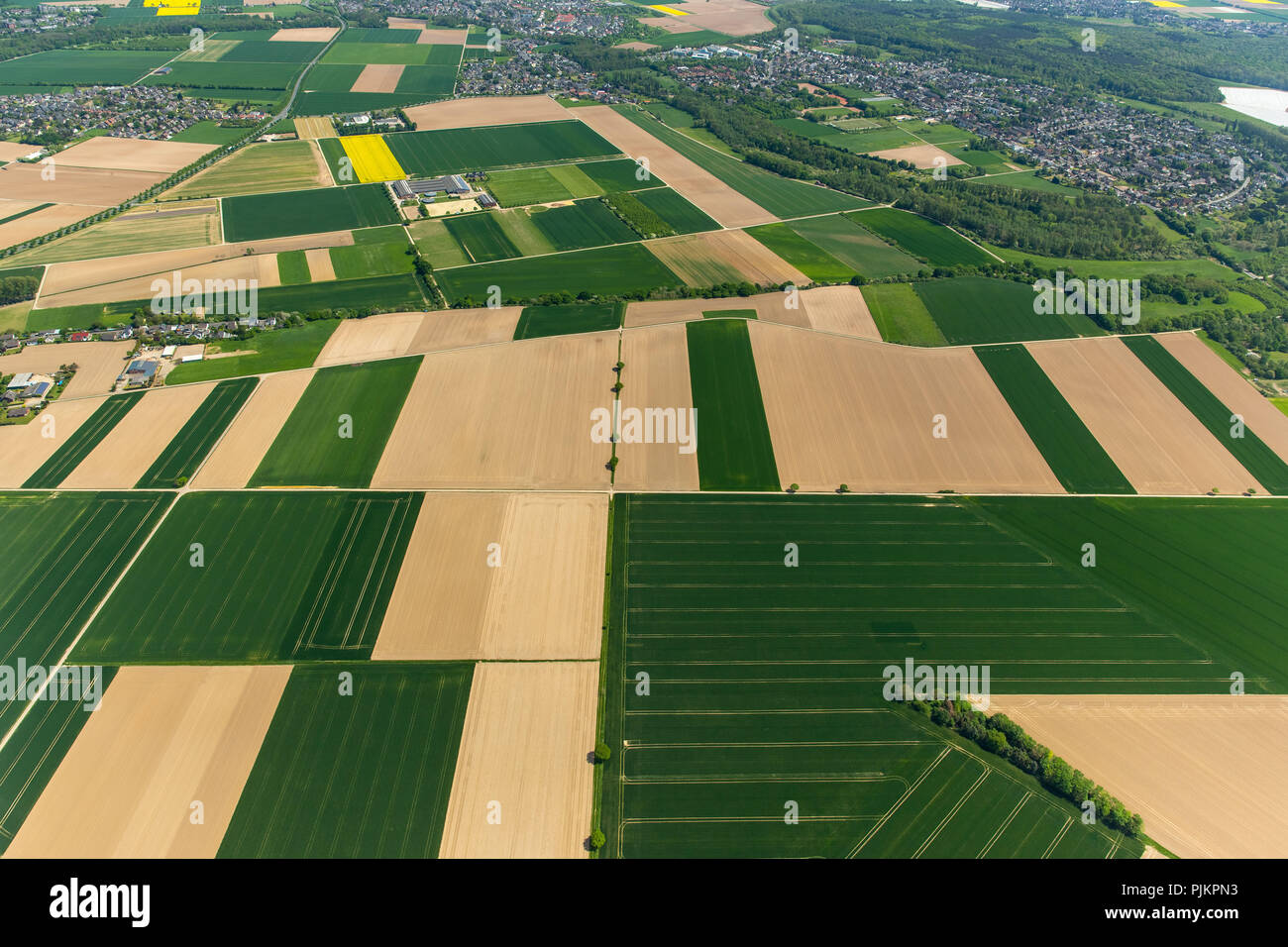 Grain fields at Lower Rhine, crop rotation, corn fields in spring, Grevenbroich, Lower Rhine, North Rhine-Westphalia, Germany - Stock Image