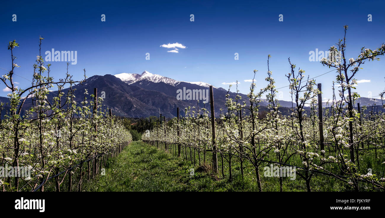 Peak of the Pyrenees Canigou in spring, symbol mountain for Catalonia, 'Holy Mountain' of the Catalans, - Stock Image