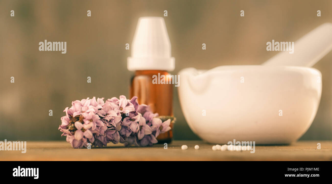 Daphne mezereum, common daphne, a poisonous plant used in homeopathy - Stock Image