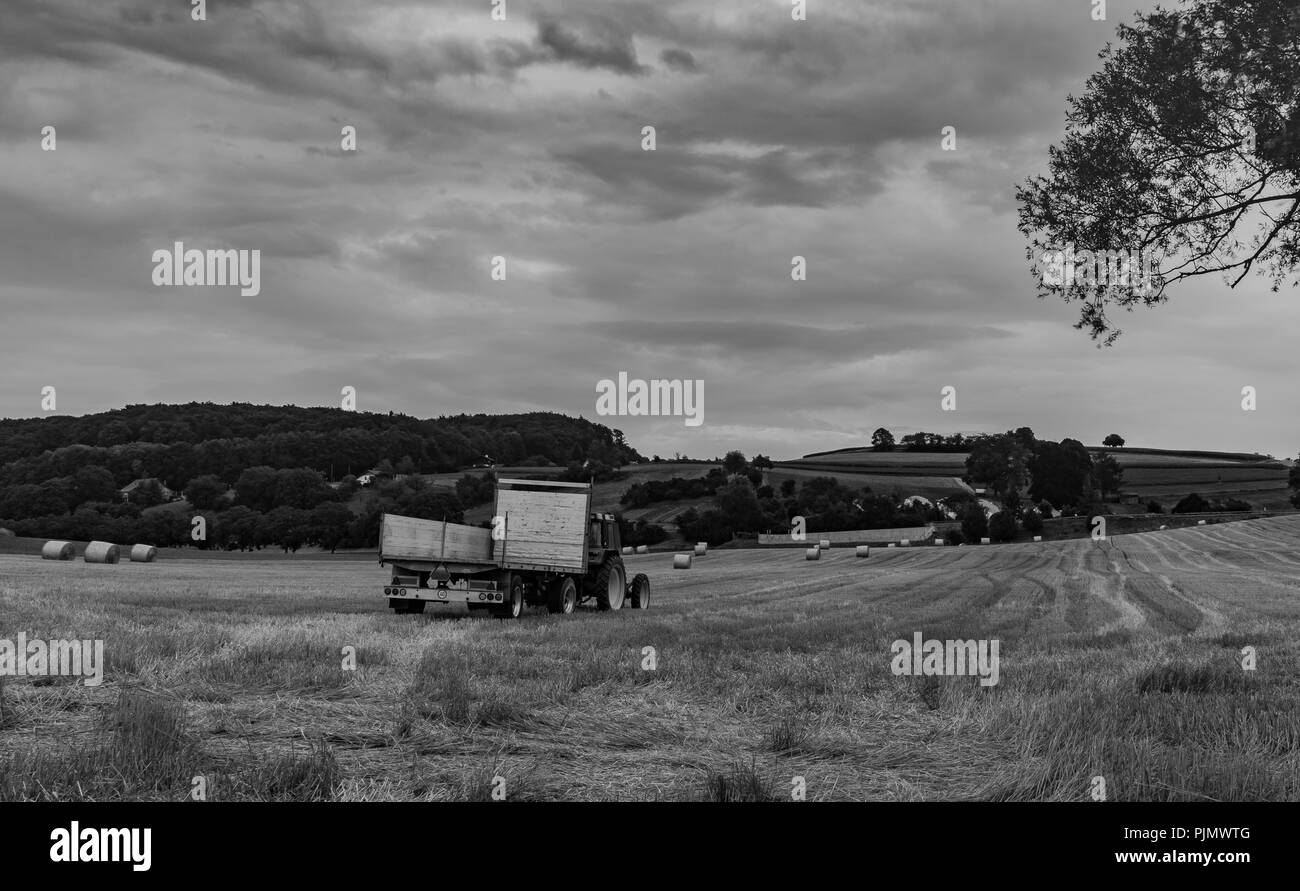 Round hay bales in field at evening and tractor with trailer. State of Vaud Switzerland. Black and white photography - Stock Image