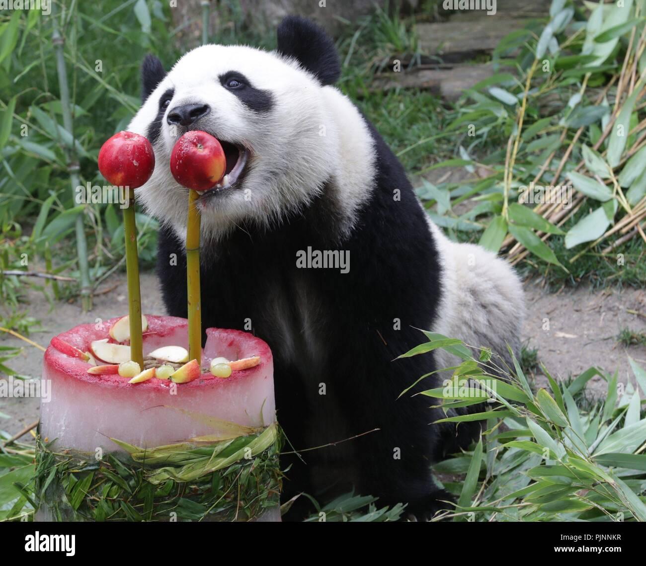 Panda Birthday Zoo Stock Photos Panda Birthday Zoo Stock Images