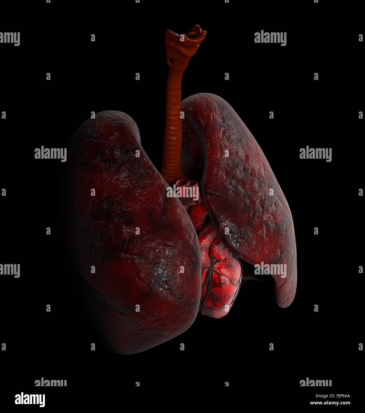 Human Lung and heart anatomy, 3d Illustration on black background - Stock Image