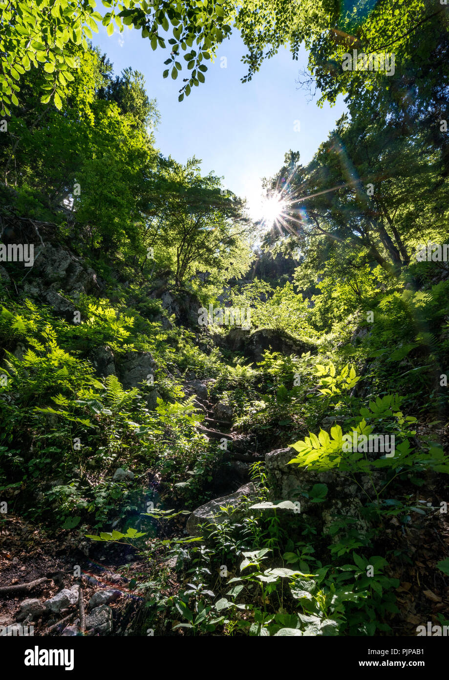 Sun shines through leaves in the forest, Sagereckersteig, hiking trail from Salet to Kärlingerhaus, Berchtesgaden National Park - Stock Image
