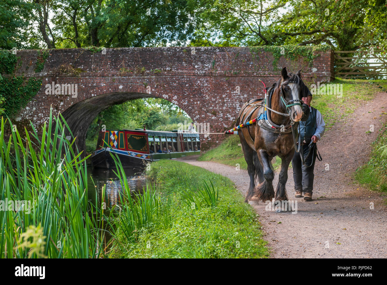 'Tivertonian', the last horse-drawn barge in the West Country, sets off for another serene trip down the Grand Western Canal near Tiverton in Devon. - Stock Image