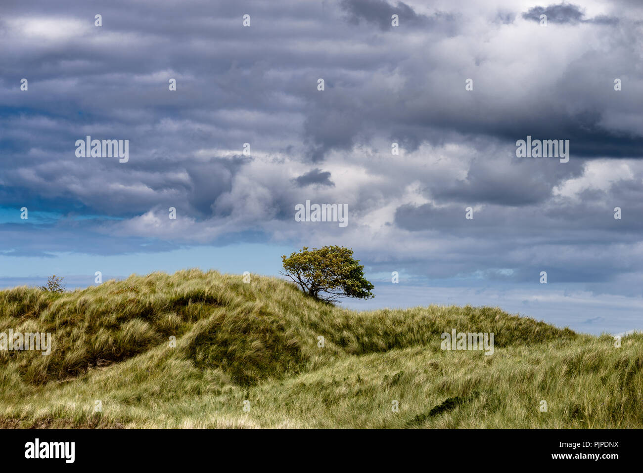 lonely tree clouds and sky - Stock Image