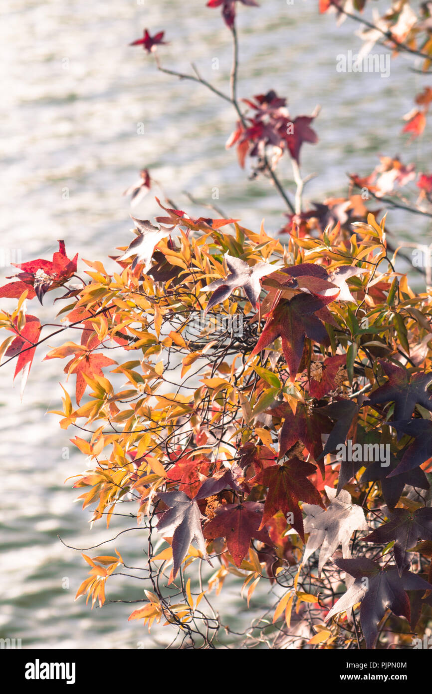 Leaves hang over a body of water - Stock Image