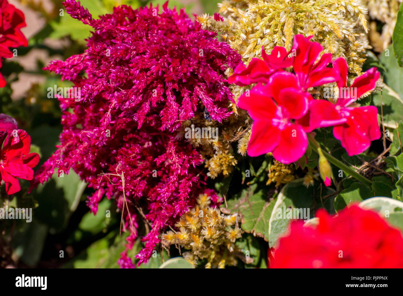 Pretty Flowers In The Middle Of The Day Stock Photo 218089030 Alamy